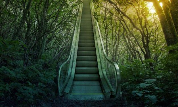 Zielgruppe Land- und Forstwirte: Vom Käferbefall bis zum Dürreschaden