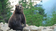Auf Brunos Spuren: Richtig gegen Bären versichern