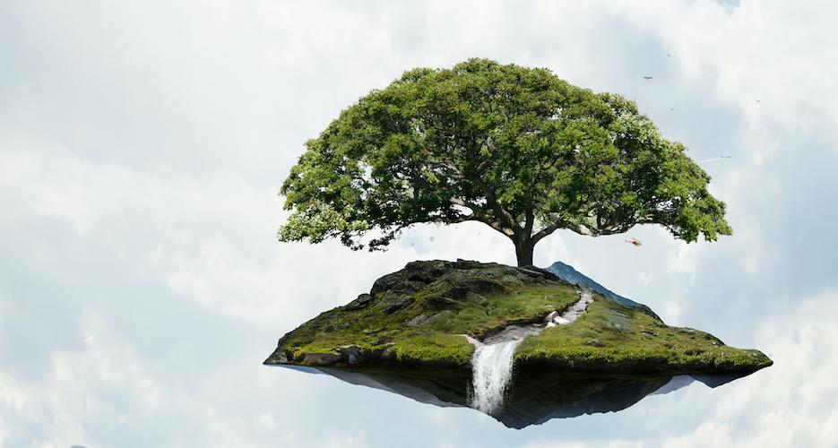Klimaschutz und Digitalisierung vereint: Wie Online-Tools Bäume pflanzen