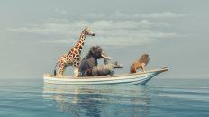Der große Welpenboom: Tierversicherung auf dem Vormarsch